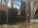 arbre02.jpg