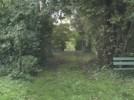 arbre04.jpg