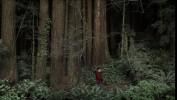 behind_the_redwood.jpg